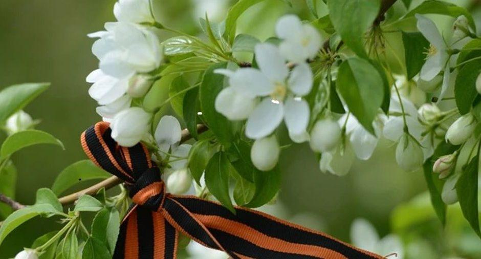 9 мая яблоня в цвету